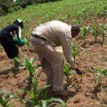 samson on farm in kenya